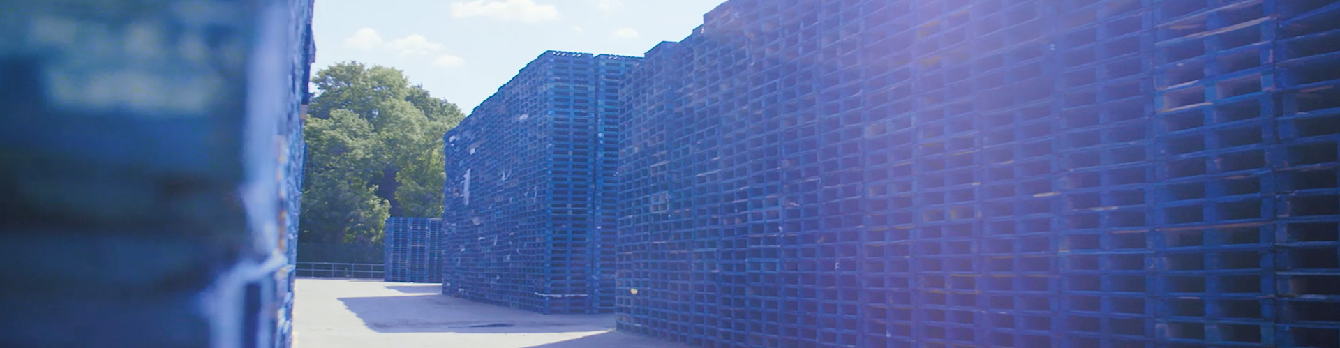 A photograph of hundreds of blue stacked CHEP pallets in rows in an outside environment