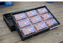 A black Reusable Produce Crate full of a dozen cartons of strawberries